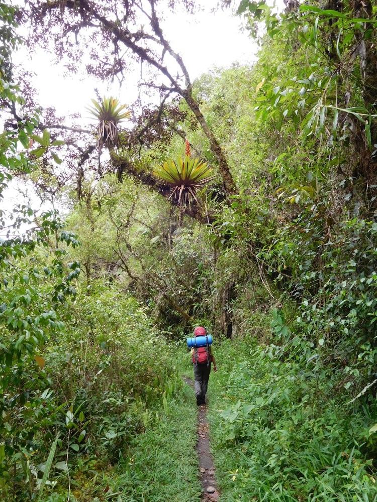 bolivien trekking choro trail yungas
