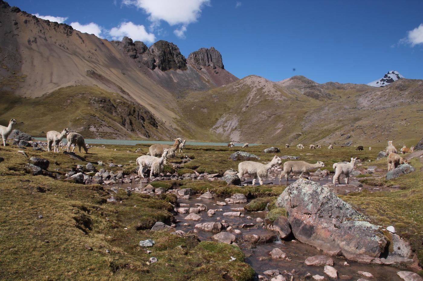 trekking in peru ausangate trek