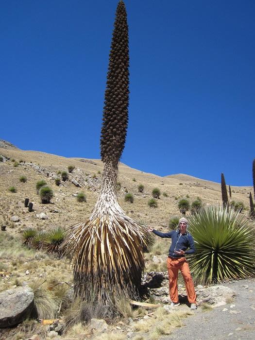 Huaraz Peru Puya Raimandi