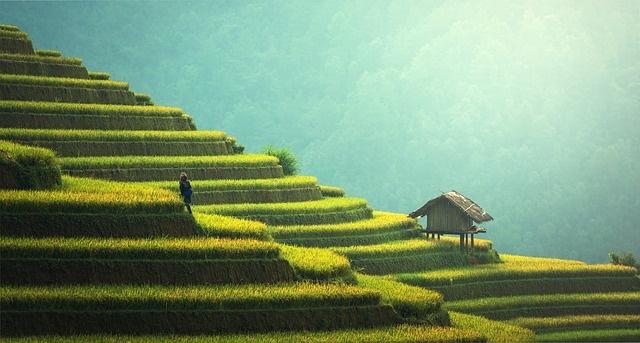 Thailand Japanische Enzephalitis